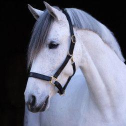 Odinis apynasris arkliui